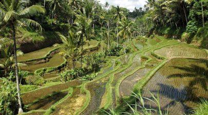 Villa Bumi Artura, Ubud, Bali
