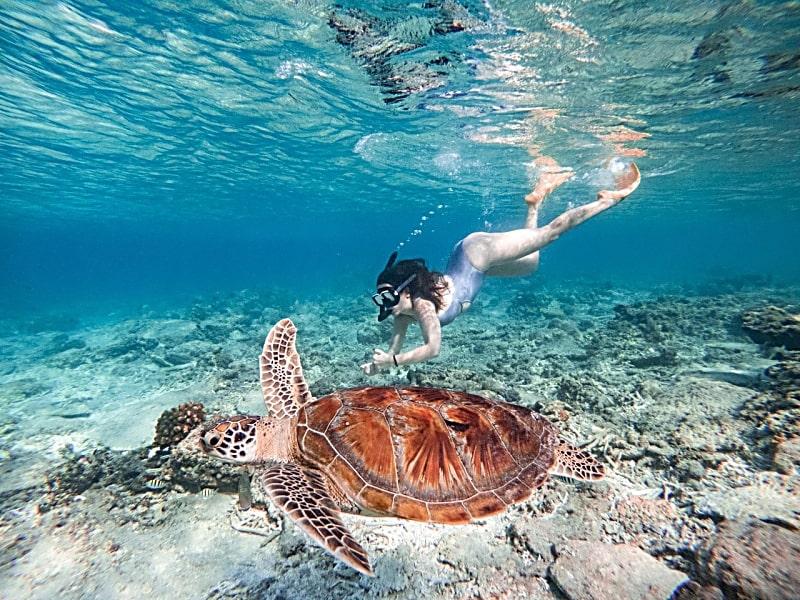 Reasons to Return To Bali - Swim with Sea Turtles